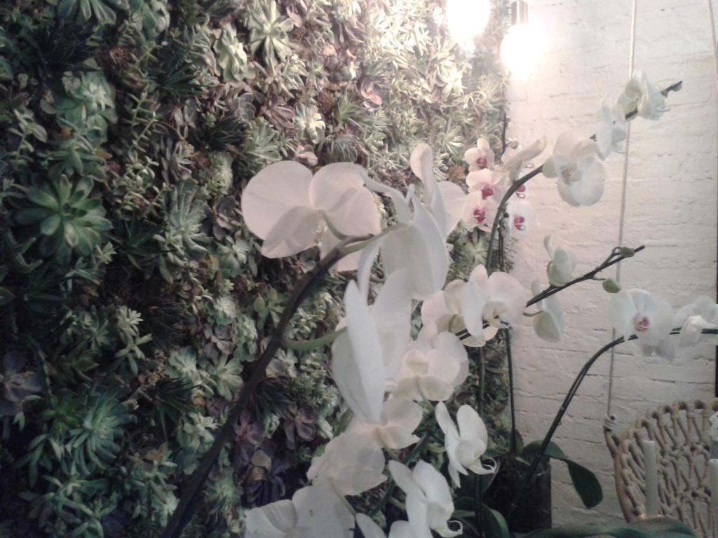 Parede verde de suculentas, com os tons rosa e roxo nas folhas