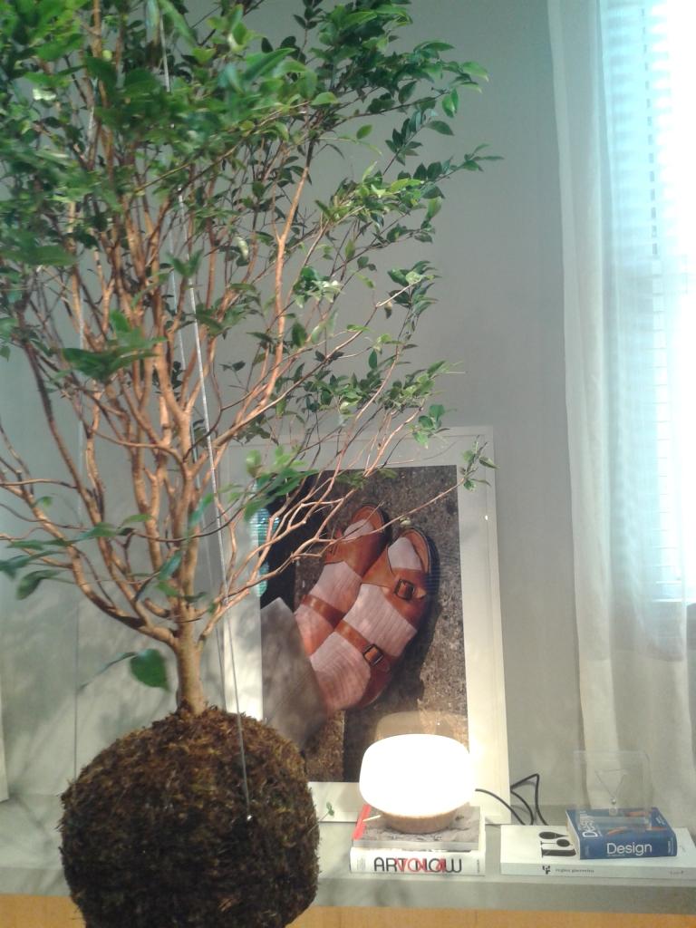 Planta suspensa sem vaso (conceito artístico na decoração).